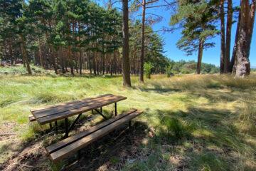 mesa de picnic en el pinar